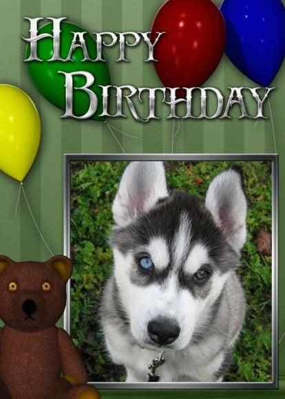 Example Birthday photo greeting card with Siberian Husky puppy photo.